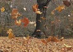 When the wind starts to whip and the leaves begin to blow, can I be too far away???