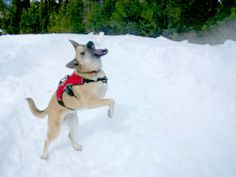 tripawds.com - Three legged dog website and support!