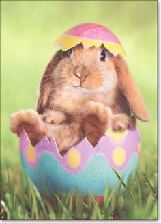 Bunny in Easter Egg Easter Card - Greeting Card by Avanti Press : By Avanti Press. Bunny in Easter Egg Easter Card. Baby Animals, Funny Animals, Cute Animals, Spring Animals, Easter Pictures, Animal Pictures, Funny Pictures, Hoppy Easter, Easter Eggs