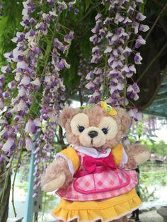 藤の花が満開♡