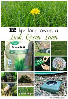 Grass Care Tips Green Lawn lawn care tips tricks lush green long summer Source: website turf grass tips topsoil perfect lush green lawn . Gardening For Beginners, Gardening Tips, Gardening Services, Indoor Gardening, Organic Gardening, Fescue Grass Seed, Lawn Care Companies, Lawn Care Tips, Lush Lawn