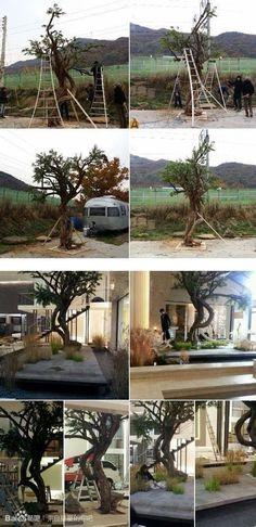 Tree at Do Min Joon apartment | Man From The Stars drama