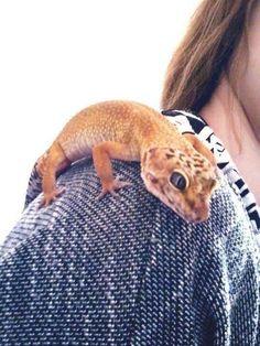 Lepord Gecko, Leopard Gecko Cute, Leopard Gecko Morphs, Cute Gecko, Les Reptiles, Cute Reptiles, Reptiles And Amphibians, Mammals, Terrarium Reptile