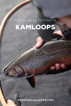 Top 5 Lakes to Fish in Kamloops - Martha Lear Fishing Rigs, Fishing Guide, Fly Fishing, Going Fishing, Best Fishing, Fish Illustration, Lake Resort, Fishing Pictures, Fish Drawings