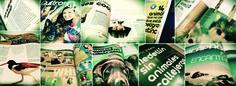 collage revista quiltros