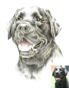 Custom Drawn Pet Portrait - MY VADER!!!!  These are awesome and highly recommended.