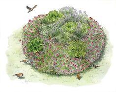 Garden Spaces: Grow an Immune System Strengthening Herb Garden