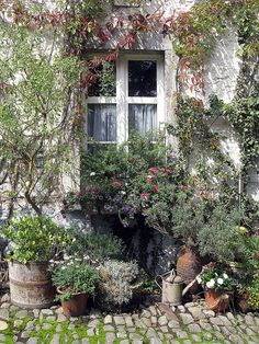 Gardening in pots, stunning window, vine, stone with moss and greens. Love all of it. French country style