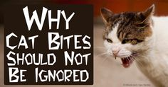 Based on the study conducted by Mayo Clinic, cat bites should never be ignored, and there are cases when victims may require hospitalization for treatment. http://healthypets.mercola.com/sites/healthypets/archive/2014/04/11/cat-bites.aspx