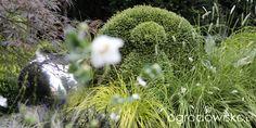 Ogród nie tylko bukszpanowy - część III - strona 882 - Forum ogrodnicze - Ogrodowisko