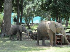 Photos of Little Governors' Camp, Masai Mara National Reserve - Ranch Images - TripAdvisor