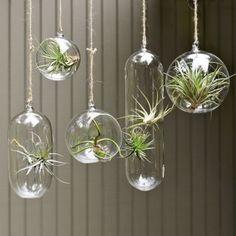 hanging terraniums...