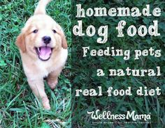 Homemade Dog Food: Real Food for Pets - Homemade dog food is a great way to make sure your dog is eating a healthy diet as long as you understand the foods dogs need and what to avoid.