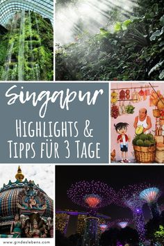 3 days in Singapore sights, highlights and tips - Trend Greenhouse Gardening 2019 Ubud, Marina Bay Sands, Singapore Sights, Engagement Solitaire, Highlights, Infinity Pool, Gardens By The Bay, Greenhouse Gardening, Koh Tao