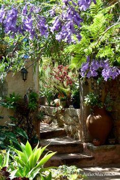 """Jacarandá em flor no jardim da """"Casa Catita"""", Algarve, Portugal."""
