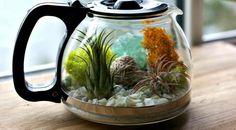 Ini dia cara membuat terarium yang dapat mempercantik ruangan Anda.