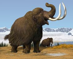 """This is one of two """"Mammoth"""" digital paintings purchased from noted natural history artist Carl Buell. The paintings will be used for outreach purposes, but there are also plans for them to find their way on to assorted gift shop items!"""