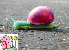 real gary the snail - Google Search