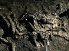 The Ladby ship is a major ship burial. Several horses were slaughtered and buried with the dead king. Probably king Gnupa of Denmark 925 AD. It is the only ship burial discovered in Denmark. It was discovered southwest of #Kerteminde on the island of Funen. The grave had been extensively disturbed. #visitfyn #visitfyn