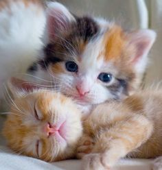 Daisy & Patches #kitty kitten cat cats cute aww omg