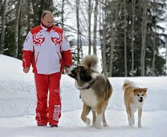 Dressed in a patriotic red and white Russia snow suit and wearing a warm-looking fur hat, the Russian premier looked at ease as he strolled in the forest snow close to Moscow with his fluffy pets, Yume, an Akita Iku, and Buffy the Bulgarian Shepherd. Russia Putin, Wladimir Putin, Russian Humor, Japanese Dogs, St Bernard Dogs, Fluffy Animals, Mans Best Friend, Dog Friends, Dogs And Puppies
