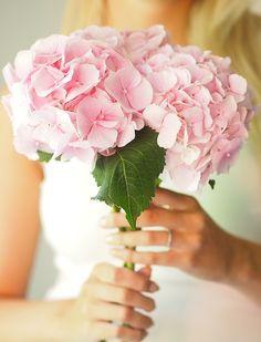My Flower, Flower Power, Scabiosa Pods, Hydrangea Colors, Hydrangeas, Very Beautiful Flowers, Beautiful Life, Flower Girl Photos, Pink Garden