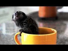 Stop the torture! Poor monkey in a cup.