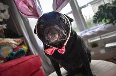 Easter Bunny haz a sad