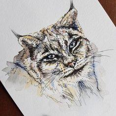 Last night's line and wash practice - the Canadian lynx 🐅 #canadianlynx #lynx #cat #bigcat #creative #instaart #lineandwash #pen #painting #penwork #artoftheday #gallery #watercolors #makeart #insta #canada #illustration #drawing #draw #painting #artist #animal #nature #art #wildcats #wildanimals #visualart #inspiration #instapainting Lynx, Make Art, Big Cats, Art Day, Insta Art, Cat Lovers, Watercolors, Drawings, Canada