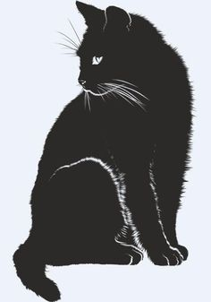 Free picture on Pixabay - Cat, shadow, silhouette, black - Cats Cats Cats - Gatos Black Cat Drawing, Black Cat Art, Black Cats, Black Cat Painting, Black Cat Images, Draw Cats, Shadow Silhouette, Free Silhouette, Black Cat Silhouette