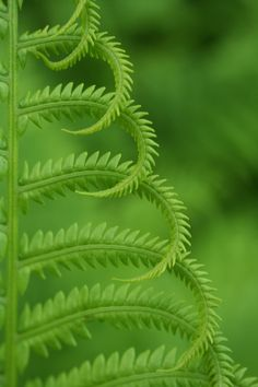 Fern...art in nature