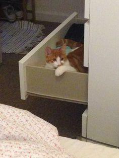Pixel in drawer