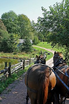 A horse and carriage ride at Ross Farm, Nova Scotia, Close to the cottage Country Charm, Country Life, Country Living, Country Roads, Country Scenes, Le Havre, Cottage, Farms Living, Take Me Home