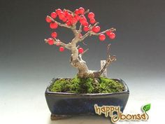 ☼♣What do you think about this pretty #bonsai tree?●♣ #BonsaiInspiration