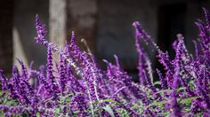 Capistrano Flowers | John Bencina Photography