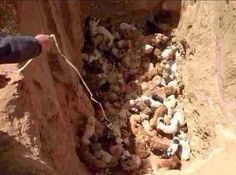 Justice for the 100 stray dogs buried alive in northern China!