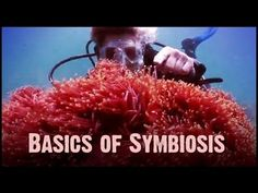 Untamed Science - Symbiosis: Mutualism, Commensalism, and Parasitism [TEKS Bio.12A]