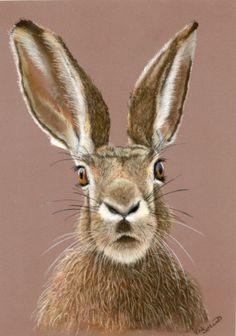 Wanda! Hare portrait