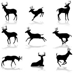Deer on bottom left--although delicate the deer can be very powerful