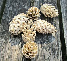 We test out bleaching pine cones at home. Does it really work and how long does it take? We have all the answers here! See them turned into a beautiful centre-piece. Would be perfect to use in winter crafts and for Christmas decorations. Fall Crafts, Home Crafts, Diy And Crafts, Christmas Crafts, Christmas Ideas, Fall Wedding Centerpieces, Winter Wedding Decorations, Christmas Decorations, Wedding Table