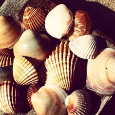 Shells for wedding on the beach _ Rosenvoile Party Atelier at work! Shells, Beach, Party, Wedding, Atelier, Conch Shells, Valentines Day Weddings, The Beach, Seashells