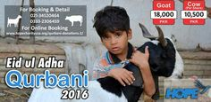 RATE: #Goat Rs. 18,000 PKR #Cow Share Rs. 10,500 PKR  FOR BOOKING: Please #Call: 021-34520464, 0333-2306459.  FOR ONLINE BOOKING: Please #visit: http://www.hopecharityusa.org/qurbani-donations-2/