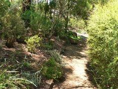Path across hill