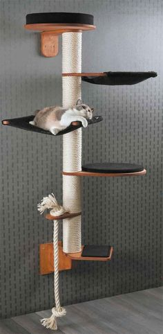 Height 186 cm Weigh Height 186 cm Weight 19 kg Wall Mounted Cat Tree Model Wendelin consists of modules: Wall bracket (H 22 cm B 13 cm T 37 cm) Step (W 30 cm D 33 cm H cm) Rope holder with sisal rope (W 13 cm D. Mimi Chat, Diy Cat Tree, Cat Towers, Cat Shelves, Cat Playground, Playground Design, Cat Room, Cat Condo, Pet Furniture