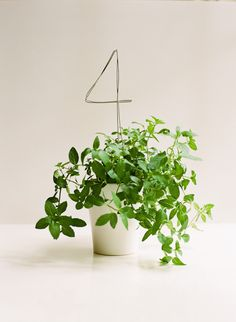 Wire Reception Table Numbers A tutorial on Diy Table Number Wedding Ideas via Once Wed.A tutorial on Diy Table Number Wedding Ideas via Once Wed. Potted Plant Centerpieces, Wedding Centerpieces, Wedding Decorations, Table Decorations, Potted Plants, Buy Plants, Centerpiece Ideas, Centrepieces, Table Centerpieces