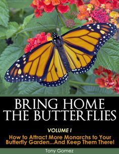 8 Top Gardening Tips that you can use this season to Attract and Support More Monarchs in your Butterfly Garden. This five-star customer rated butterfly garden guide is available as a PDF download and can be viewed on most digital platforms including pc's, macs, ipads, android tablets, smartphones and more. Bring Home the Magic of Monarchs!