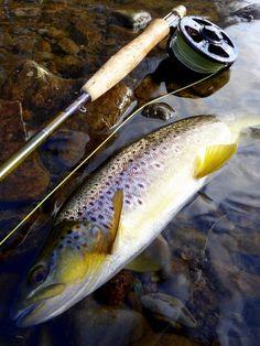 e9d47eea73d Paul Procter FlyFish ( paulprocter)