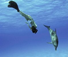 Swimming with the Dolphins in the sea