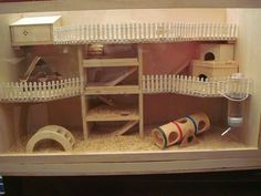 Diy hamster cage and toys