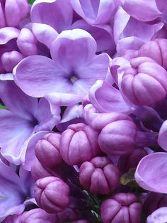 Lilac...one of my favorite flowers